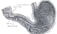 Image of a stomach