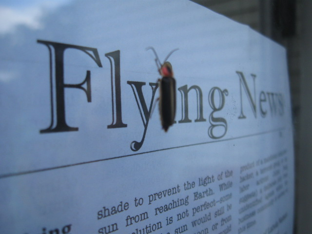 Some kind of flying bug on The Flying News.