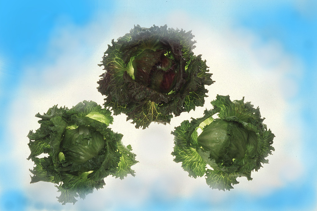 A Picture of Lettuce in the Clouds.