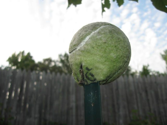 impaled tennis ball