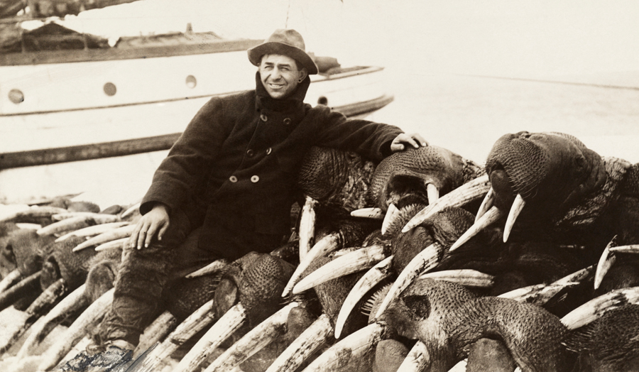 Walrus_hunter_1911