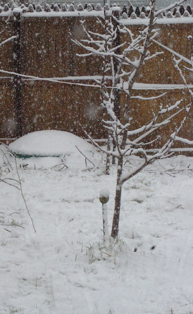 A small tree covered in snow.